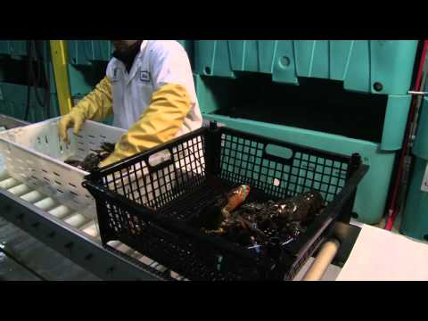 Santa Monica Seafood Company Delivers Seafood to Restaurants