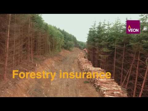 Veon - Forestry Careers