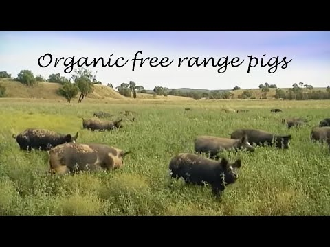 Anvil Media | Organic Free Range Pigs Education Video