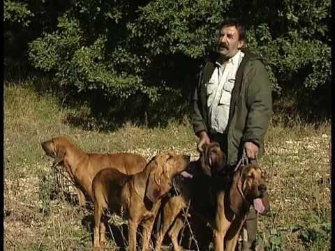 Chasse : Les chiens courants sur chevreuil et lapin (documentaire)