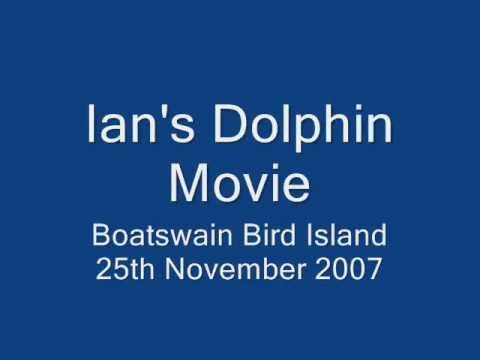 boatswain birds island dolphins