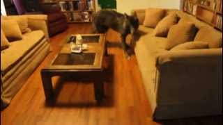 Lori Jumps Coffee Table