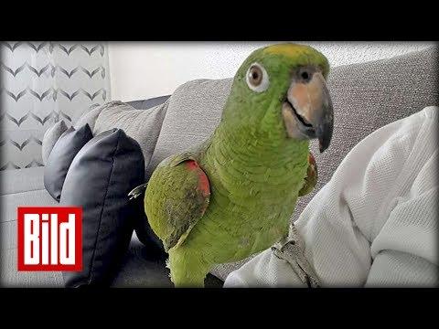 Papagei Entflohen - Spricht Nur Türkisch