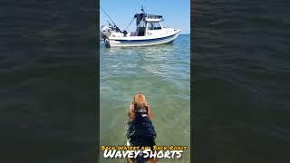 "Wavey the Pocket Beagle | ""She doesn't know she can swim"""