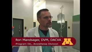 Umn Veterinary Medical Center