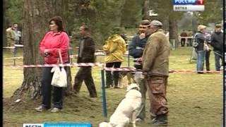 Выставка охотничьих собак (ГТРК Вятка)