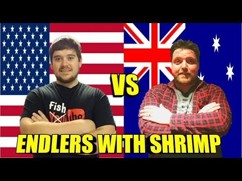 Keeping And Breeding Endlers With Shrimp | United States Vs. Australia