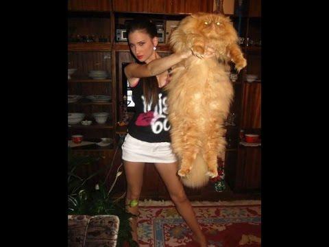 Top 10 des plus gros chats du monde
