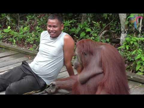 Tanjung Puting National Park At Central Borneo Pangkalan Bun