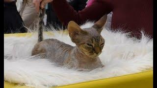 Выставка кошек в Екатеринбурге 2018 в Гринвиче