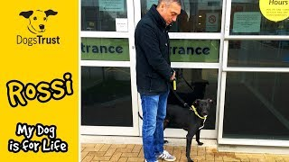A year in the life of Rossi | #MyDogIsForLife | Dogs Trust Manchester