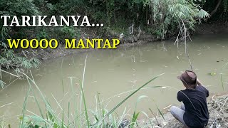 Download Video MANCING DI SARANG IKAN  GABUS MP3 3GP MP4