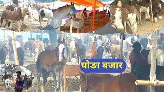 घोङा बजार । भारत का सबसे बङा घोङा बजार सोनपुर मेला ।