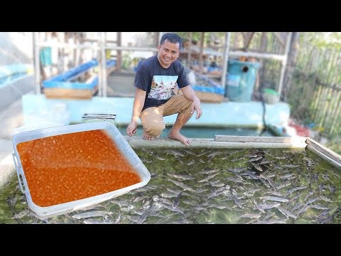 The REASON Why You Should Feed Your Fish With LIVE-FOODS