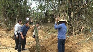 Người dân Quảng Nam ra quân trồng tre chống sạt lở ven sông Thu Bồn