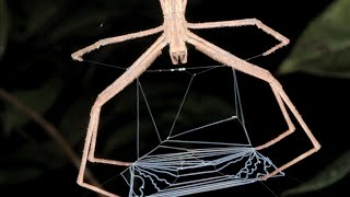 Why Spiders Don't Stick To The Web