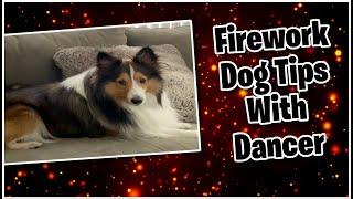 #shorts Firework Dog Tips with Dancer The Shetland Sheepdog