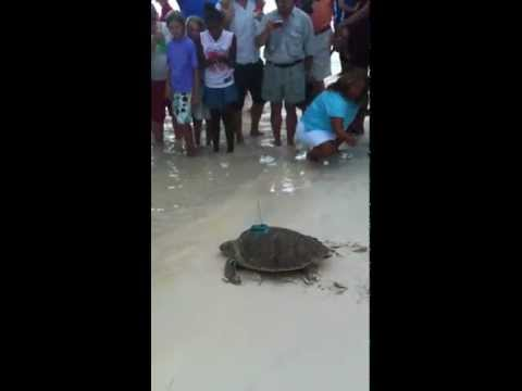 BIOS-Release of the Sea Turtle Pinney
