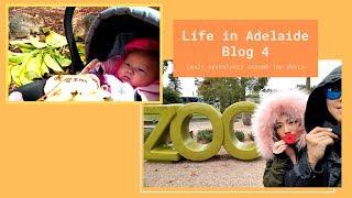 【Australia Vlog 4】4 reasons to visit Adelaide Zoo! | Aussie life