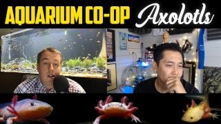 Lets talk about Axolotls?! How to Setup an Axolotl Aquarium