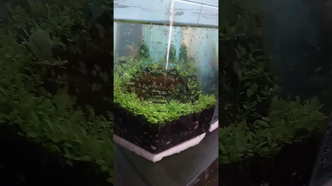 Aquascape Ideas Filter Aquascape Mini