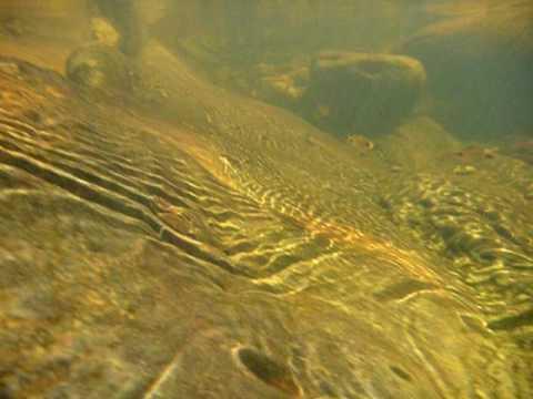 Nagalapuram underwater life