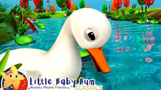 五只小鸭子 + 更多儿童歌曲 | 精选合集 | 童谣 | 儿歌 | 乐宝宝 | Little Baby Bum