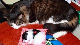 Спящий котенок - мягкая игрушка со звуком