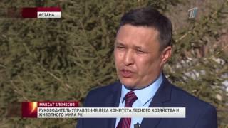 2017 Первый канал ЕВРАЗИЯ  Главные новости  Выпуск от 11 04 2017