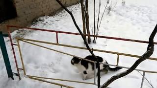 Киев, кошки на Вышгородской, 59Б