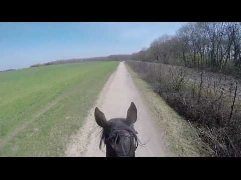 Trail Ride On A Thoroughbred With Full Speed Gallop
