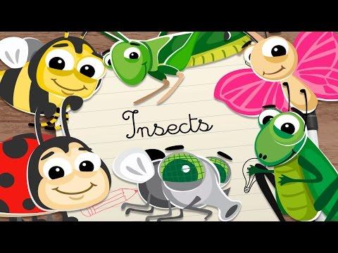 Insectos En Ingles Para Niños Vocabulario En Inglés Para Niños
