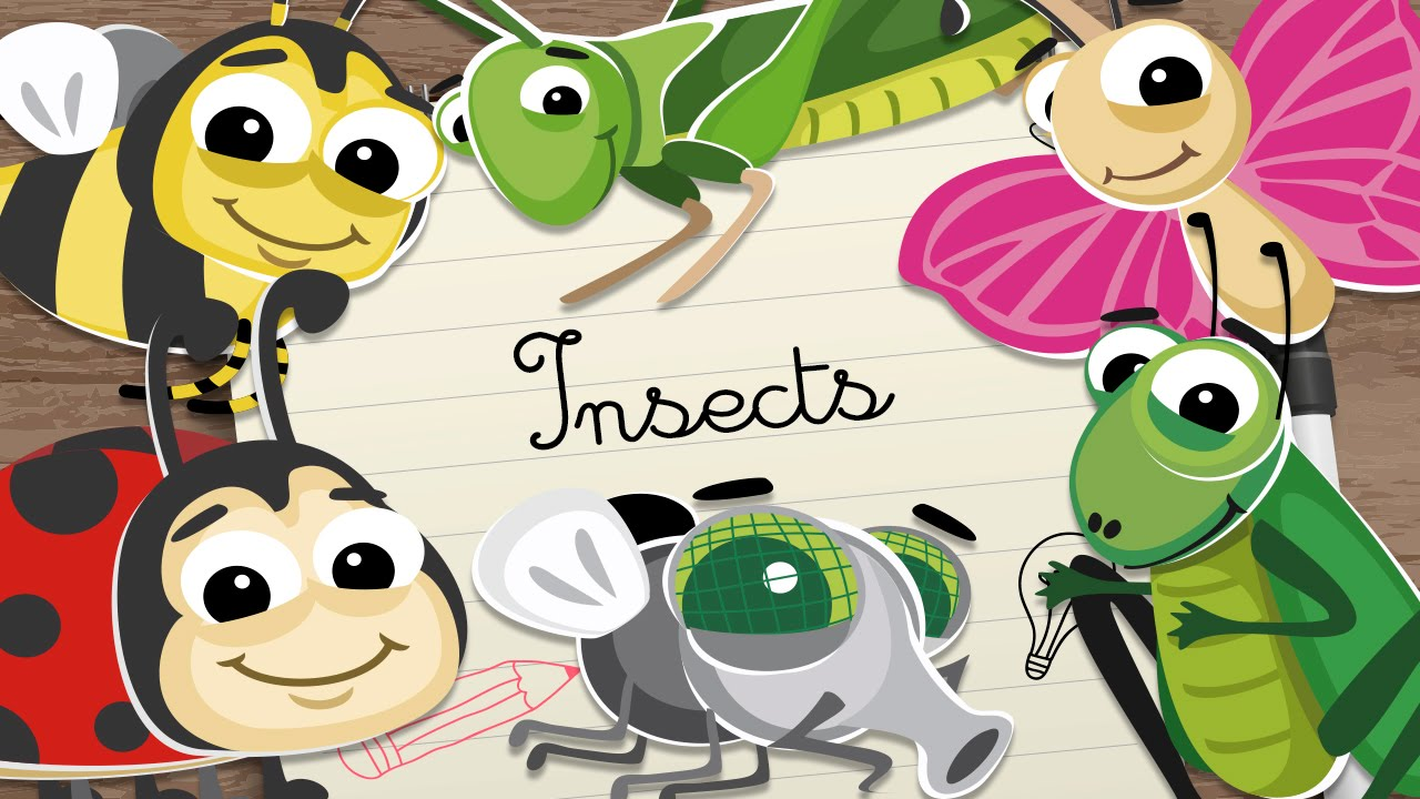 Insects For Kids Vocabulary For Kids