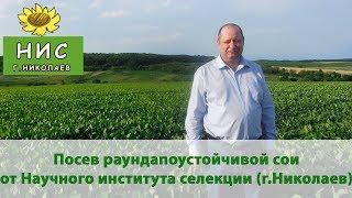 Посев семян сои под Раундап от Научного института селекции (г. Николаев)