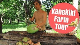 Kanekiki Farm Tour ~ Hawaii Fruit Farm