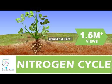 NITROGEN CYCLE from YouTube · Duration:  4 minutes 49 seconds