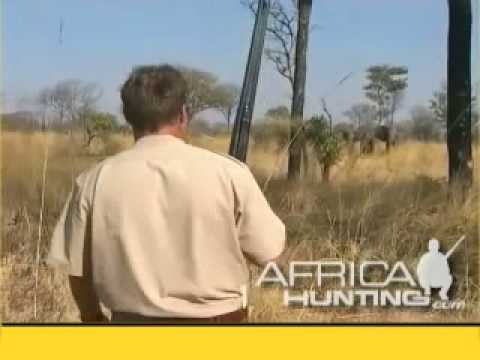 Elephant Charge while Hunting – AfricaHunting.com