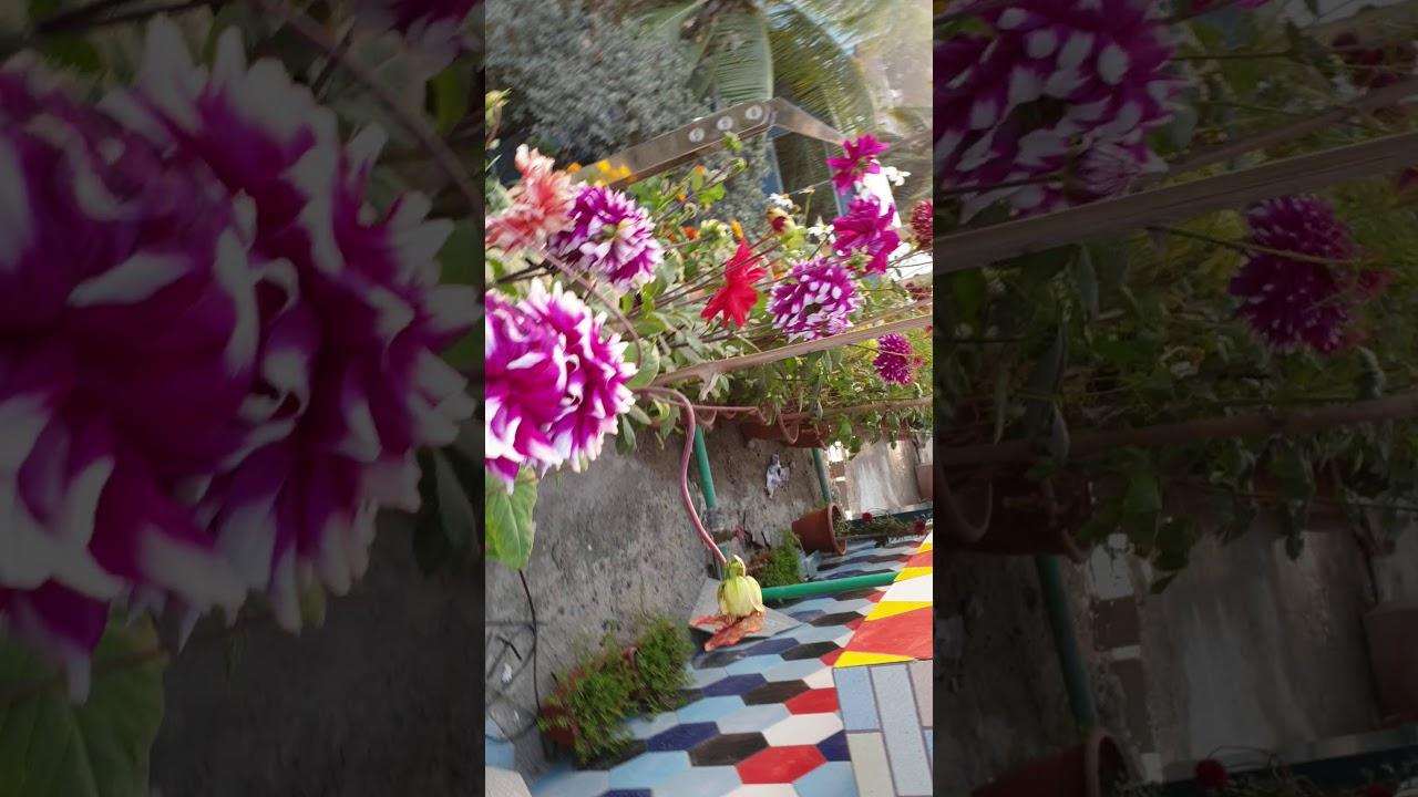 Joy garden-5 - YouTube
