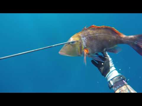 Three months of bad weather, finding a feed, Norfolk Island spearfishing.
