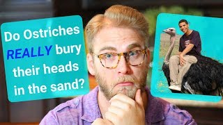 Do ostriches REALLY bury their heads in the sand??