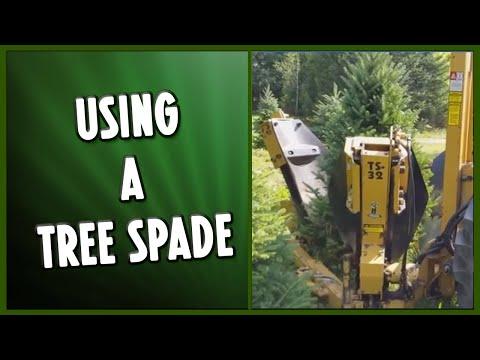 Tree Spading Process