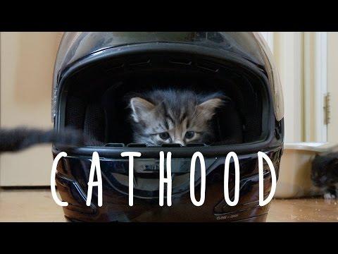 Boyhood (cute kitten version)