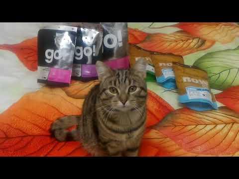 狸花猫  🐱💭Мой кот любит Go natural, Now Fresh