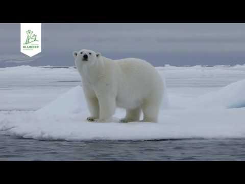 Samenvatting Blijdorp College 'ijsberen in het Noordpoolgebied'