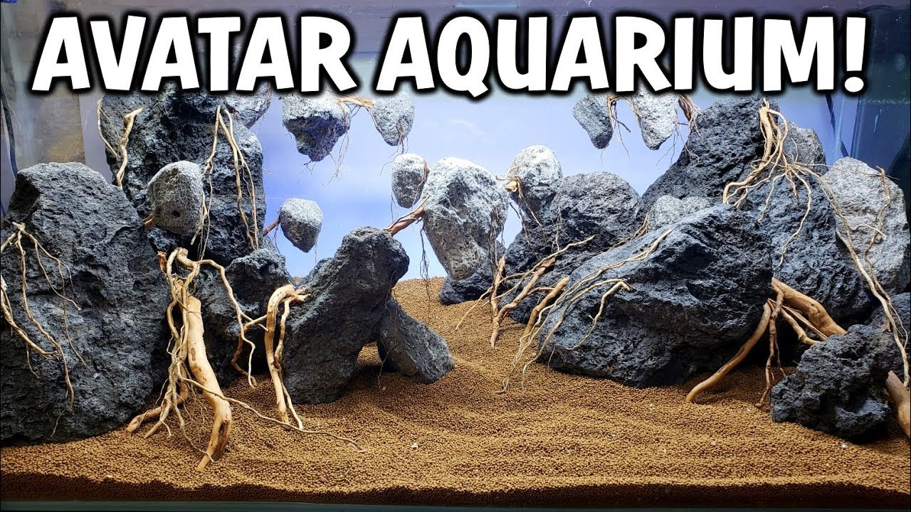NEW AVATAR Planted Aquarium Setup! Part 1: The Aquascape ...