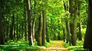 Chant des Oiseaux - Bruits et sons apaisants de la nature pour dormir - Sommeil Relaxation
