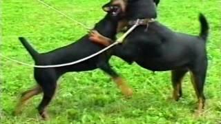 2006г Охотничьи собаки 2001