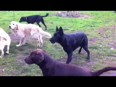 vip dog park honden hotel   honden pension  11