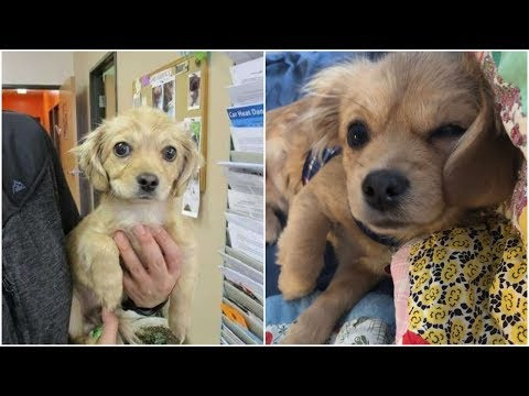 Shelter puppy Was scared of everything he is no longer afraid after getting adoption