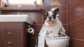Смешные собаки Приколы про собак Funny Dogs 2019 (Самые Курьезные ситуации)